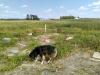Cemetery Dog